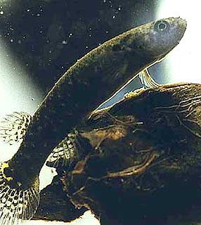 peixearvore.jpg