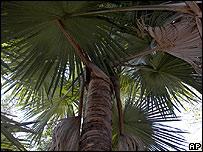 palmeiragigante.jpg