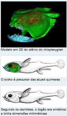 cerebro_peixe