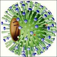 virus_h1n1