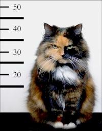 evil_cat